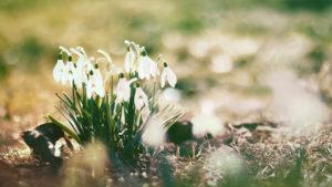 До +13: в Украину идет настоящая весна
