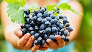 Что произойдет с организмом, если каждый день есть виноград