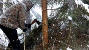 ЧП на Житомирщине: браконьеры в балаклавах забросали лесников свето-шумовыми гранатами