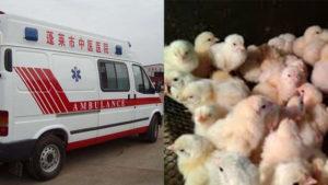 В китайской провинции Хунань зарегистрировали вспышку птичьего гриппа