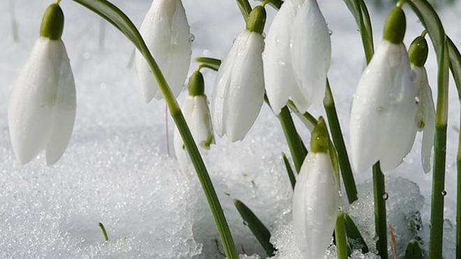 Март в феврале: синоптик представил аномальный прогноз на последний месяц зимы