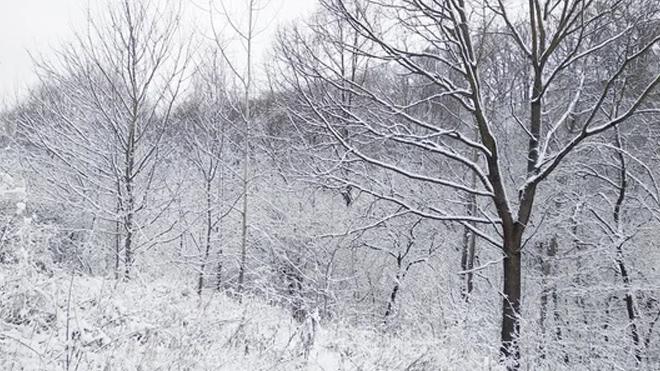 Резко похолодает и пойдет снег: синоптики удивили прогнозом погоды на конец марта