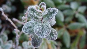 Готовьте куртки и плащи: синоптик предупреждает в ближайшие дни заморозки
