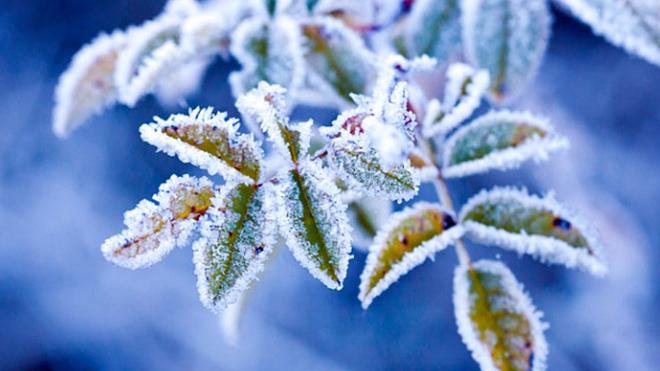В Украине ожидаются первые заморозки: какая погода удивит уже скоро