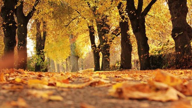 Погода в Украине с 8 -11 ноября