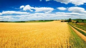 Новости Украины – Рынок земли: по какой цене распродадут гектар украинского чернозема