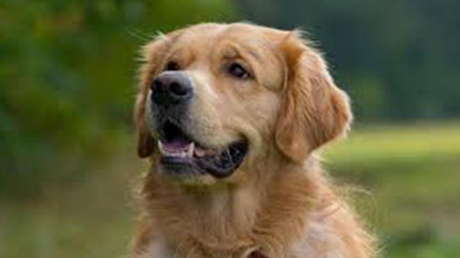Новости Украины – Отлавливал соседских собак, снимал с них шкуры и съедал: дикая история на Житомирщине. ВИДЕО