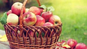 Գիտնականները պատմել են խնձորի օգտագործման անսպասելի օգուտի մասին