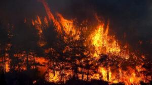 Թուրքիայում անտառային հրդեհներն անկառավարելի են դառնում